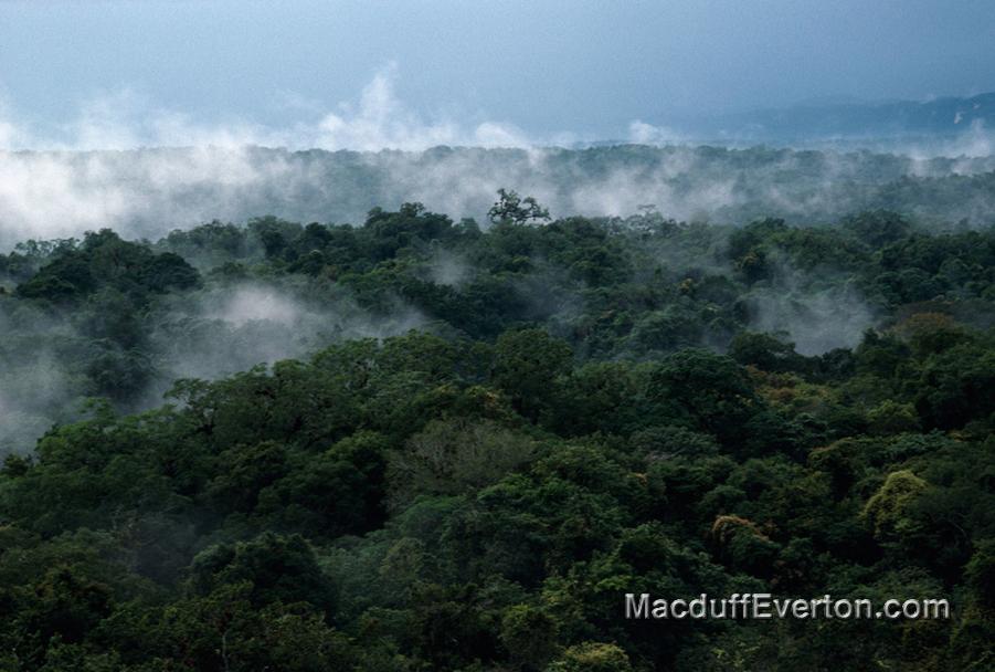 8-Mist-Maya-Forest