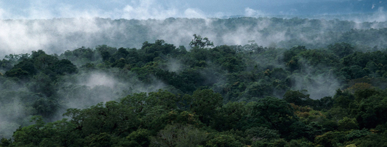 The Maya Forest is a Garden